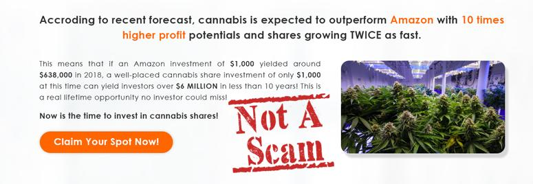 There is No Cannabis Trader Scam