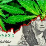 weed millionaire review